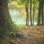 Piękny i {zadbany zieleniec to nie lada wyzwanie, w szczególności jak jego konserwacją zajmujemy się sami.